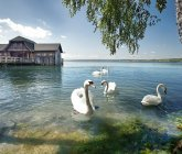 Bootshaus am Ammersee<br/><h7> © Jenny Sturm - fotolia.com</h7>